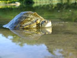 welcome to texas turtles
