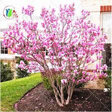 30pcs bag magnolia seeds magnolia tree seeds magnolia flowers