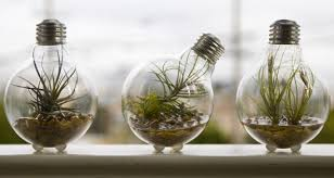 where can i recycle light bulbs ten incredible planters created from old light bulbs recyclenation