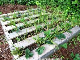 how to grow your own food recycled wood pallet garden update