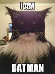 Im Batman Meme - i am batman cat for the win random pins pinterest batman cat