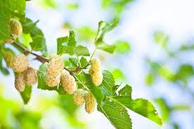 20 unique fruits grow backyard
