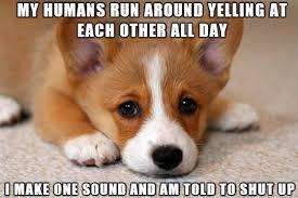 Corgi Puppy Meme - sad corgi meme doesn t understand why his voice is always silenced