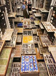 inside the secret collections of the us national museum of natural