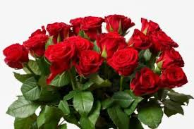 The Month Of June Flower - a national day for the flower of love and romance agnet west