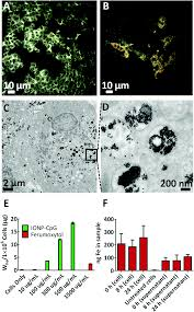 functionalized iron oxide nanoparticles for controlling the