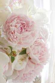 We Could Be Beautiful by 96 Best My Love For Peonies Images On Pinterest Pretty Flowers
