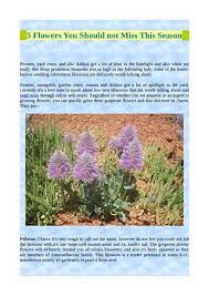 a flower you shouldn t 5 flowers you should not miss this season by alyssa atkins issuu