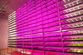 where to buy plant lights shigeharu shimamura massive ge led grow light farm tall trees led