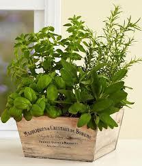 Indoor Herbal Garden Container Herb Garden Ideas U2014 Eatwell101