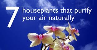 uc technologies 7 indoor plants that purify the air around you