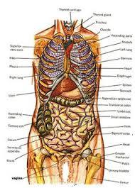 Human Anatomy Upper Body Human Anatomy Diagram Show Me The Human Anatomy Very Interactive