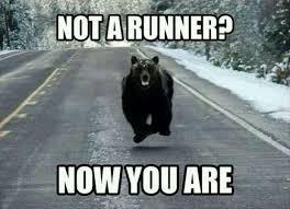 bear meme running wild running pinterest bear meme meme and humor