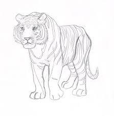 tiger rough sketch by bookstoresue on deviantart
