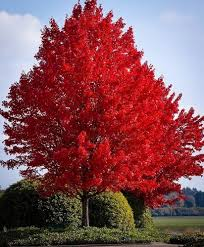 best tree choices to plant in fall season self reliance central
