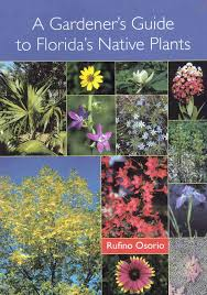 native plants to florida 27 best florida native plants images on pinterest native plants