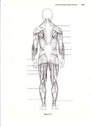 anatomy diagrams to label image collections learn human anatomy
