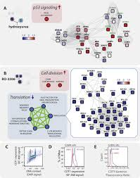 proteomic analysis of the response to cell cycle arrests in human