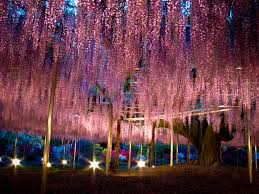 Ashikaga Flower Park by 13 Ashikaga Flower Park 090503 Japan Guide Japan And Wanderlust