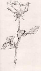 flower sketch illustration and imagination pinterest flower
