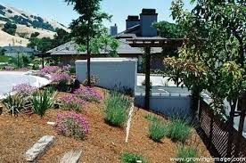 Drought Friendly Landscaping by California Drought Tolerant Landscaping Southern California Native