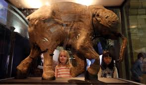 woolly mammoths return extinction ladbible
