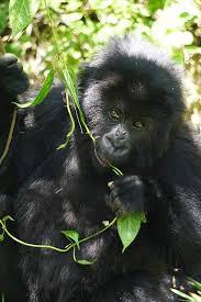 delve into rwanda africa u0027s new seat of tourism travel news u0026 top
