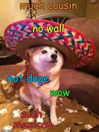 Shiba Inus Meme - sombrero shiba inu memes imgflip