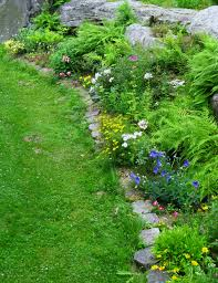 Rock Garden Perennials by Garden Bloggers U0027 Bloom Day July 15 2014 Cosmos And Cleome