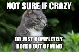 Crazy Cat Memes - why cats run around and act so crazy