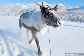 reindeer sleigh trip oymyakon siberia winter adventure