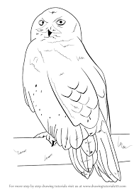 learn how to draw a snowy owl birds step by step drawing tutorials