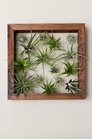 grünpflanzen im schlafzimmer evrgreen büropflanzen zimmerpflanzen in hydrokultur