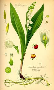 small lily flower tattoos top 25 best lily of the valley ideas on pinterest stephanotis