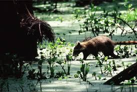 Louisiana wildlife tours images Louisiana swamp tour photos of cajun country swamp tours jpg