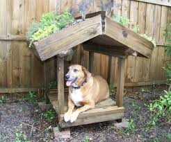 green roofed dog veranda 9 steps with pictures