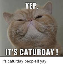 Caturday Meme - vep it s caturday ifs cafurday people yay caturday meme on me me