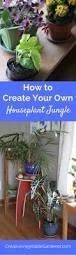 how to create an indoor jungle with houseplants gardens the
