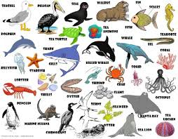 ocean animals pictures with names
