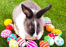 bunnies for easter take your from this bumper assortment of easter idioms