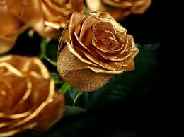 gold roses the roses in the garden were yellow she thought but when she