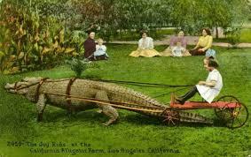 afghan hound de 1 mes alligator angora u0026 afghan toby u0027s wrecking crew