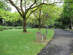 Botanical Gardens In Singapore by Lone Bench In The Park In Singapore Botanical Gardens Stock Photo