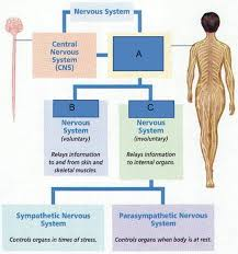 Apologia Human Anatomy And Physiology Anatomy Research Topics Gallery Learn Human Anatomy Image