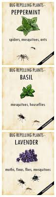 how to keep bugs away from porch plants that keep bugs away plants gardens and balconies