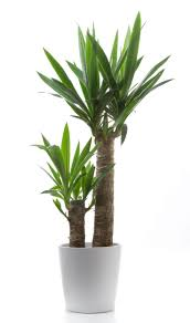 indoor palm 95 best plant images on pinterest green green walls and landscaping