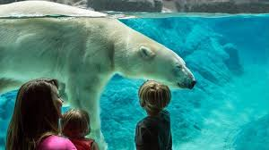 North Carolina Wild Swimming images Unleash your wild side with the north carolina zoo just for you jpg