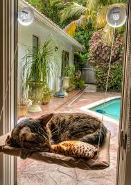 Window Sill Cat Bed Online Get Cheap Pet Window Seat Aliexpress Com Alibaba Group