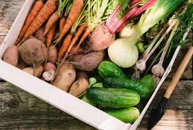 vegetable gardening for beginners u2013 planting a beautiful vegetable