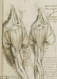 leonardo da vinci u0027s anatomical sketches on 2 and album